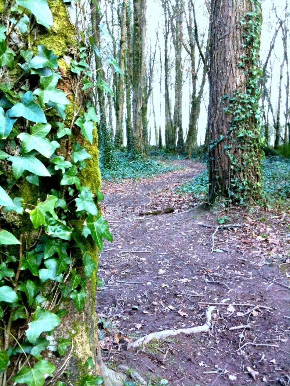 rostellan wood 6